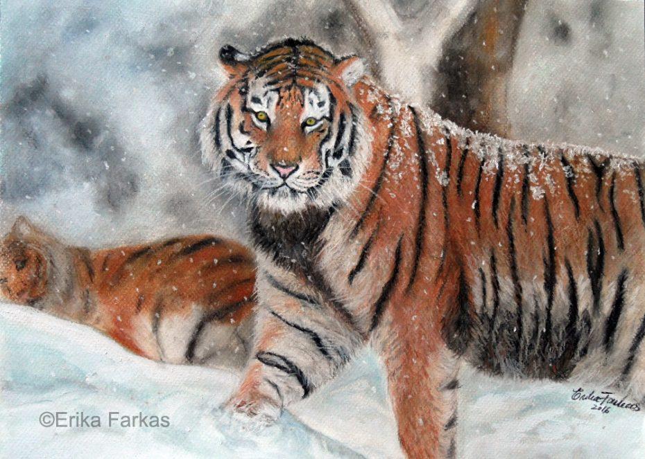 Farkas_Tigers_in_the_snow