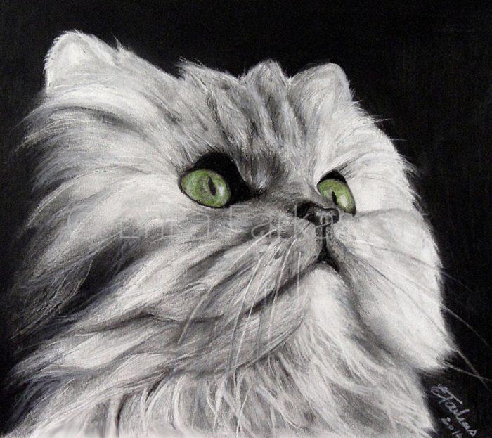 cat_800