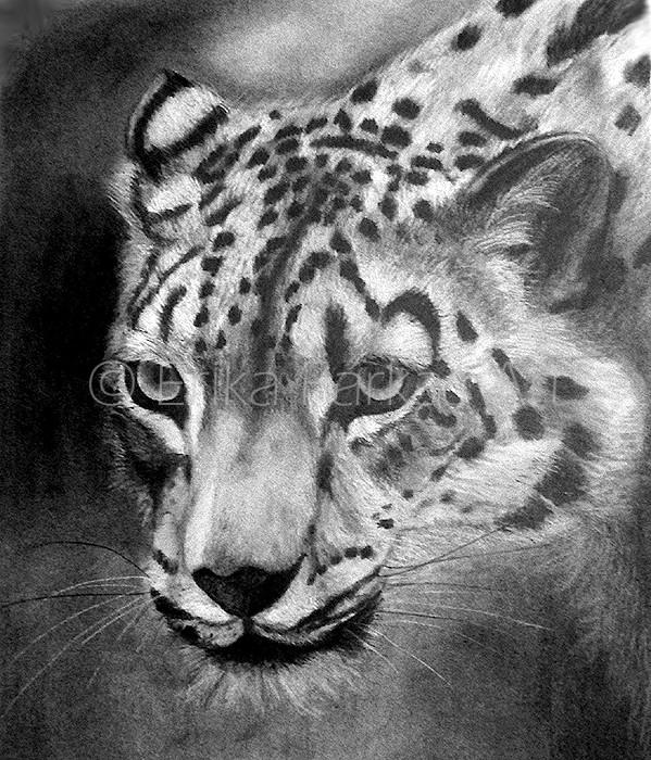 leopard_700