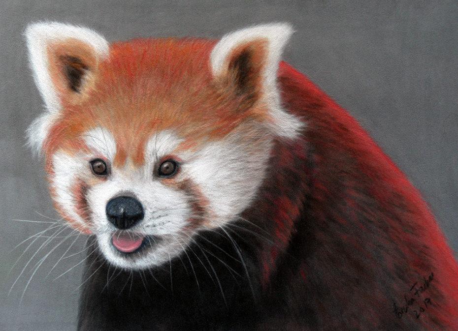 red_panda_1000