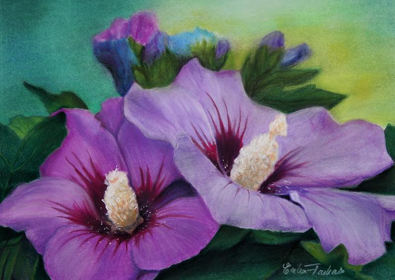 hibiscus_pair_800