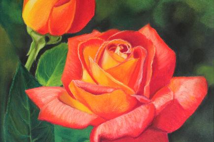Flaming Roses