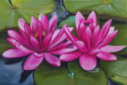 Blushing Waterlilies