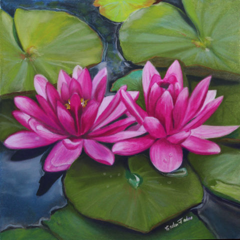 Blushing Waterlilies
