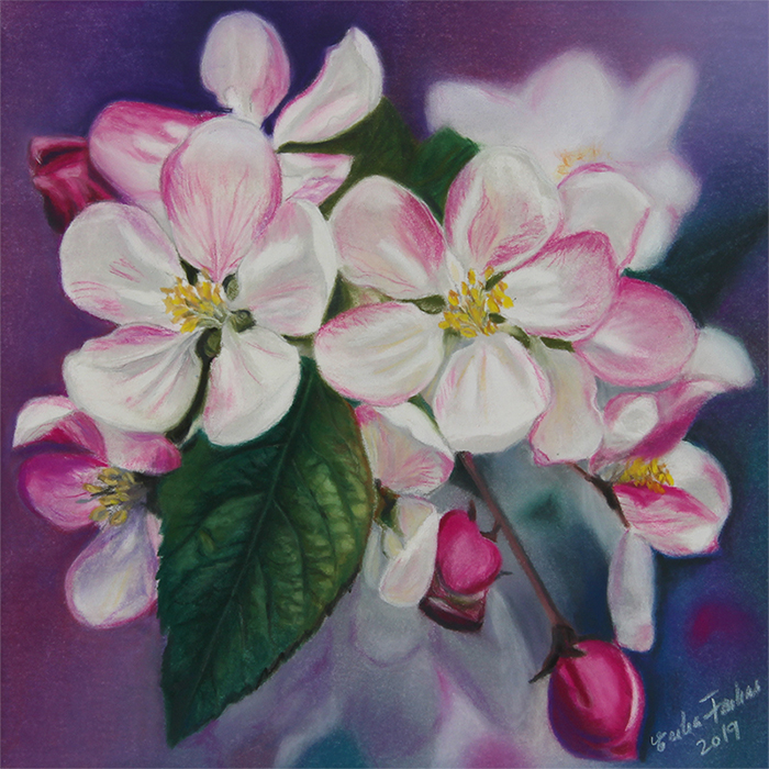 apple_blossom1-700